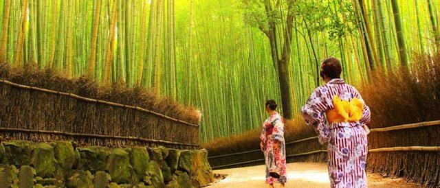 Bamboo and Kimono